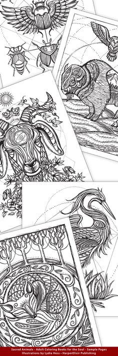 Artist spotlight lydia hess coloring books and artist Sacred animals coloring book