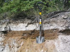 An 8-inch thick (20 cm) layer of volcanic ash from the White River eruption is exposed in Canada's Yukon Territory between Whitehorse and Dawson CIty.<br />
