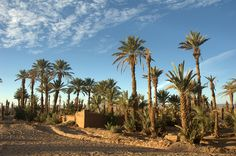 Circuit kasbah and oasis,circuit from Marrakech to desert,marrakech team building,excursion from Marrakech,business travel,golf event
