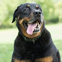 Pet Card Rottweiler