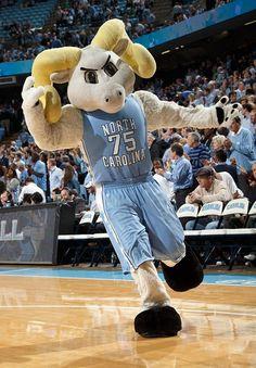 Ramses, mascot of the North Carolina Tar Heels