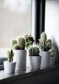 Le piante grasse e piú in generale le piante di piccole dimensione sono ottime per dar vita agli angoli della casa dando carattere anche agli spazi meno interessanti. Oltre alla…