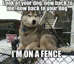 I'm on a fence