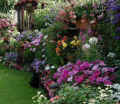 bunte blumen für cottage garden einlegen