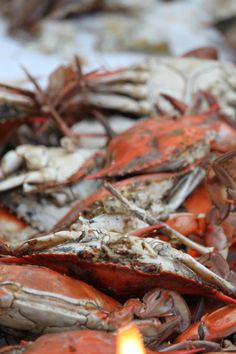 Go crabbing and catch a feast!