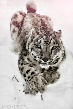 http://ift.tt/1K6283m #animals  by dariankat http://ift.tt/1WrPwVy #pierceandbiersadorf