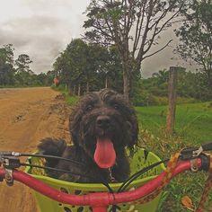 Você disse PASSEAR???? 😱🚲💕 #dogslife #biketrip #bikedog