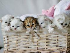 #cats #babies #kittens