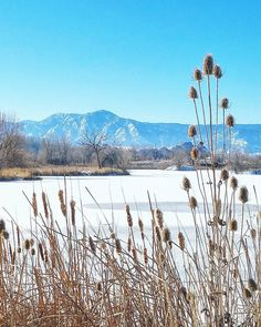 It's been a rather crispy weekend in Colorado! Colds of -20C (sub-zero F) with icy roads made us decide against a trip to the mountains but luckily it's possible to enjoy the beautiful sunny winter weather right at home too! Sawhill Ponds is a great place for a leasurly winter hike.  #boulder #visitboulder #boulderco #bouldercolorado #bouldergov #colorado #visitcolorado #coloradolive #coloradoliving #hiking #patikointi #vaellus #erämimmit #boulderhikerchicks #OptOutside #outdoors #ulkoilu…