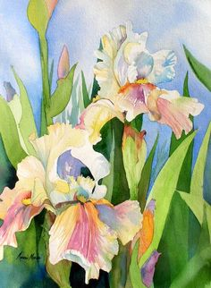 Irises by Marni Maree