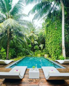 tropical backyard- We can help you design and build this! www.geremiapools.com