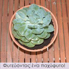 Κυριακή στο σπίτι...: Φυτεύοντας ένα παχύφυτο! [Project 102]