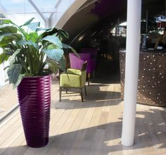 Spin planter in 'juicy aubergine', planted with Spathiphyllum