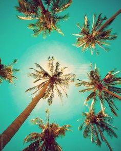 #aqua #teal #turquoise palms