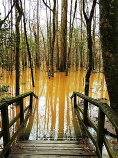 The flooded Swamp Bog, Congaree National Park Temperate Deciduous Forest, Congaree National Park, Palmetto State, Growing Tree, The Places Youll Go, South Carolina, Wilderness, Acre, Trip Advisor
