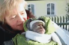 If this doesn't make you laugh, nothing will. Poor monkey looks like a garden gnome escaping!