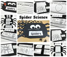 Teaching in October - Tunstall's Teaching Tidbits, spiders, spider science, spiders first grade, spiders second grade, all about spiders, spider week