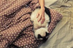 A 2013 study published in Physiology and Behavior found that cats who didn't like the sensation but allowed their owners to stroke them anyway were more stressed-out than those who avoided touch. Via: 50 Secrets Your Pet Won't Tell You Cat Sleeping, Wake Me Up, The Secret, Your Pet, Physiology, Told You So, Behavior, Pets, Study