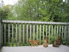 cat proof balcony