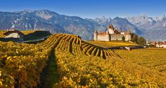 Aigle, a castle in the vineyards. Lausanne, Beautiful Castles, Beautiful Places, Places Around The World, Around The Worlds, Canton, Visit Switzerland, Tourist Office, Central And Eastern Europe