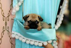 Dogs, dogs, dogs! www.teacuppuppiesstore.com 954-353-7864