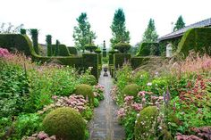Structured topiary contrasts brilliantly with loose planting of perennials and the hedging sets it off brilliantly