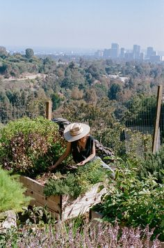 """Edible Gardens LA. """"Edible Gardens LA builds, plants and sustains organic vegetable gardens. Lauri Kranz teaches gardening at local schools and with her company Edible Gardens LA, helps chefs, families and anyone with an interest in having a home garden grow lush gardens full of organic vegetables."""""""