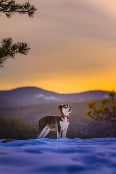 Bodhi the adventure pup http://ift.tt/2iBeuae