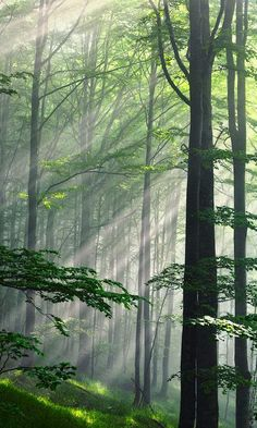 I love this. Reminds me of camping in the woods. :)  Fleeting Beams