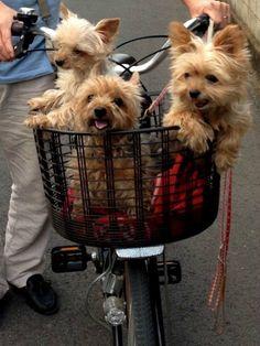 Do ya wanna ride along?...