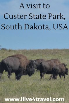 Read about my visit to Custer State Park South Dakota, USA South Dakota Vacation, South Dakota Travel, Reisen In Die Usa, Usa Places To Visit, Sylvan Lake, Custer State Park, Rapid City, Us National Parks, Camping
