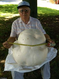 "An Incredibly Large Mushroom you have there.  NORTH DORCHESTER, ONTARIO- The 84 year old who found a 15 pound, 20-inch-wide mushroom had ""never seen a puffball that large in this life,"" he told the CBC"