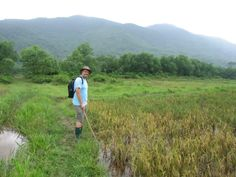 Rice paddy fields in Vietnam Lang Co, Vietnam, Rice Paddy, Fields, Golf Courses, Blog, Architecture, Design, Travel