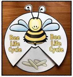 Bee Activities, Animal Activities, Preschool Activities, Bees For Kids, Bee Crafts For Kids, Honey Bee Life Cycle, Cycle For Kids, Beehive Craft, Life Cycle Craft