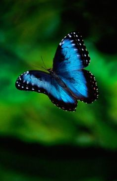 They can win race against you.If you think that you can catch a flying butterfly by running behind it, you will lose the race. Butterflies fly pretty fast. However, their average flying pace is 12 miles per hour but some of them can measure a distance of 25 miles in one hour, from Iryna