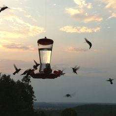The old soul in me loves to sit and watch our hummingbirds feed. They are just magical.