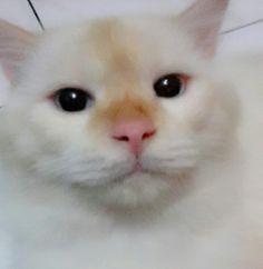 Putih so cute
