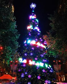 Time for Christmas celebrations #Christmas #downunder #aussiechristmas #sydneysider #sydneyigers #martinplace #wanderlust #celebrations #christmastree #tannenbaum