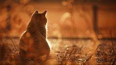 фотограф анималист кошки: 2 тыс изображений найдено в Яндекс.Картинках