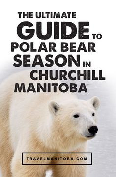 The ULTIMATE guide to polar bear season in Churchill, Manitoba Churchill Polar Bears, All About Canada, Canadian Travel, Visit Canada, Photography Tours, Oceans Of The World, Life List, Ball Necklace, True North