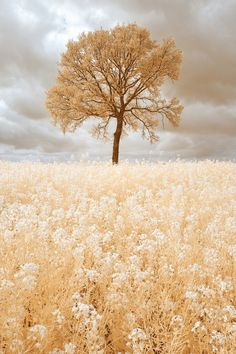 alseide-fiore: Golden Tree by Pierre Louis Ferrer