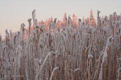 Winter at lake Tuusula