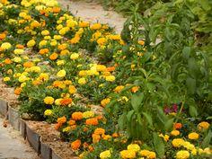 #Flores de #color #naranja y #amarillo