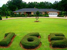 Topiary by Mr. Pearl Fryar, self-taught topiarist, at his home in Bishopville, South Carolina - photo form David Cobb Craig blog