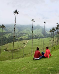 Valle del Cocora  No se que es lo que nos depara el destino solo se que quiero vivirlo a tu lado  Valle del Cocora  No se que es lo que nos depara el destino solo se que quiero vivirlo a tu lado  I dont know what destiny has in store for us I only know that I want to live by your side  #walkingday #walkingday #places #photooftheday #lovequotes #cocoravalley #valledelcocora #moments #memories #tbt #mylove #valley #withmyboy #myfav #photography #landscapephotography Golf Courses, Memories, Mountains, Nature, Travel, Destiny, Te Quiero, Live, Colombia