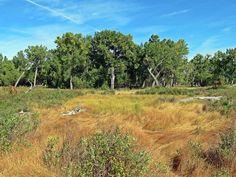 Hiking Cottonwood Flats Trail in Dinosaur Provincial Park near Brooks, Alberta, Canada #hiking