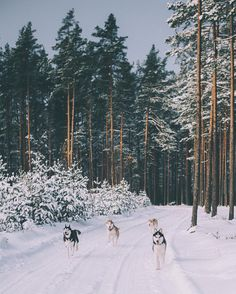 Discovered by Find images and videos about photography, nature and winter on We Heart It - the app to get lost in what you love.