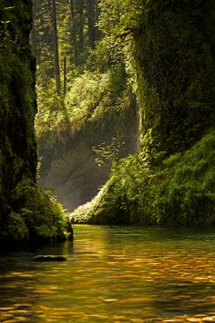 Eagle Creek, Columbia River Gorge National Scenic Area, Oregon by Ross Murphy
