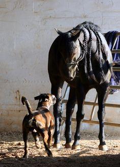 Pferde Hunde Liebe