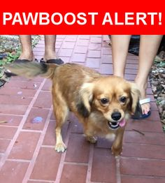 Is this your lost pet? Found in Miami, FL 33186. Please spread the word so we can find the owner!  Description: she doesn't have a right front leg.   Nearest Address: Miami Zoo